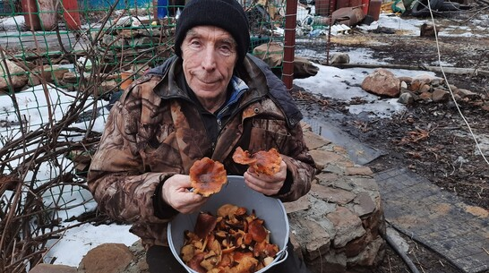 В поселке Подгоренский в феврале выросли луговые опята