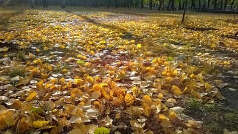 Сухая погода продержится в Воронеже до конца выходных
