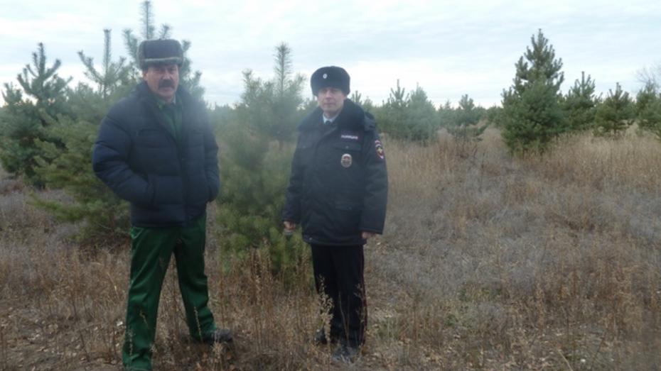 В Верхнемамонском районе стартовала природоохранная акция «Новогодняя елка»