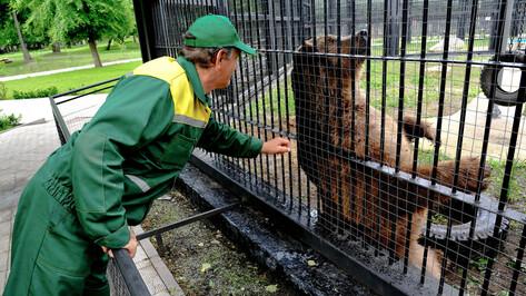 В Воронежском зоопарке обезьян и медведей в жару накормят замороженными фруктами