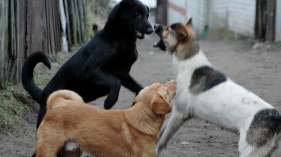 Участок под приют для животных под Воронежем власти готовы выделить безвозмездно