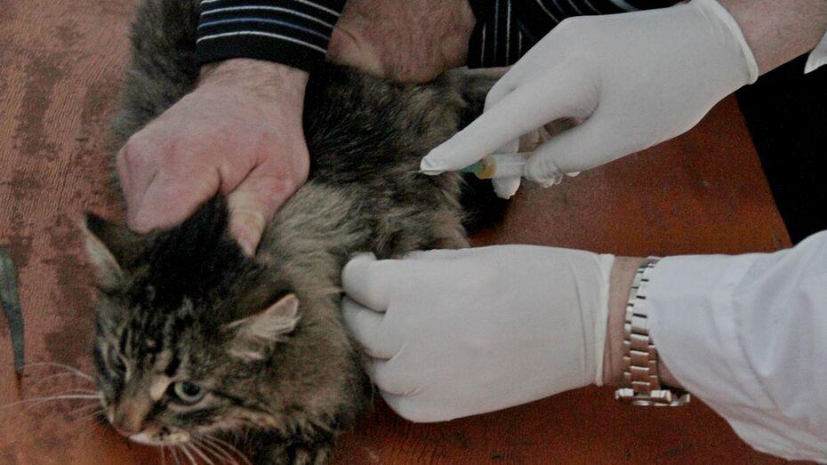 В Аннинском районе участились случаи нападения домашних кошек на людей