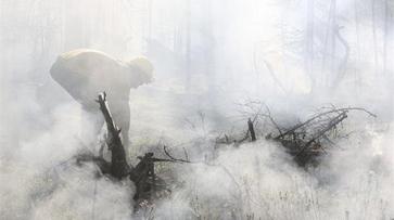 Авиалесоохрана спрогнозировала лесные пожары в Воронежской области в июле