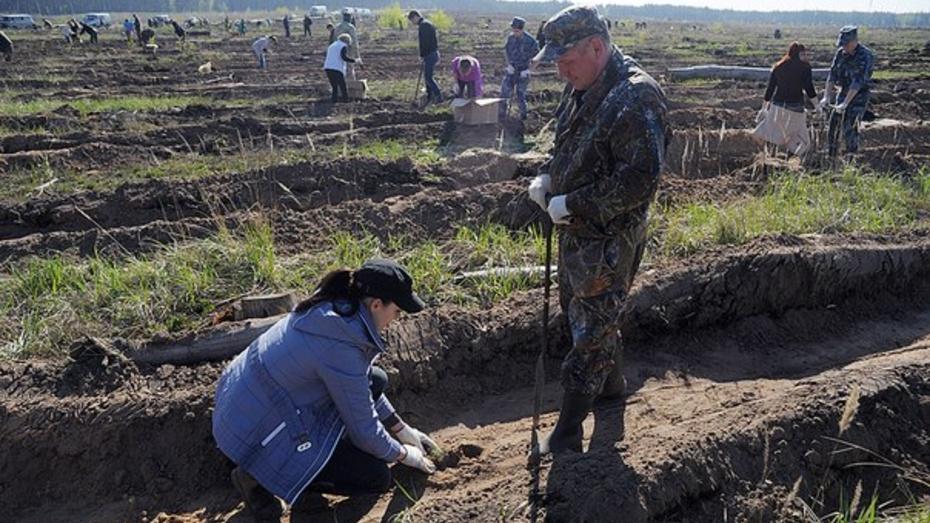 Воронежцев пригласили на посадку деревьев на Кожевенном кордоне