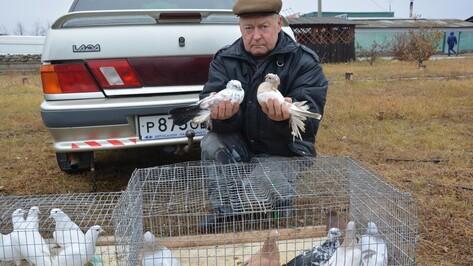 В Поворино прошла выставка-продажа голубей