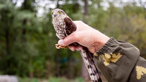 Сотрудники Воронежского заповедника спасли застрявшую в форточке птицу