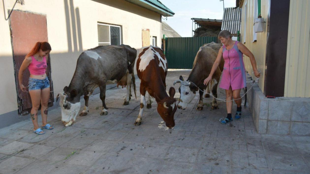 «Молочные» деньги. В селе в Воронежской области восстановили поголовье КРС