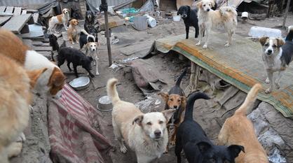 Массовое убийство собак в частном воронежском приюте привело к уголовному делу
