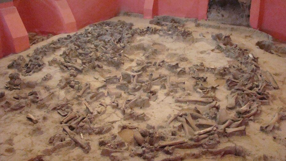 Воронежцев пригласили на раскопки в Костенки