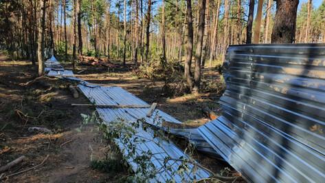Ущерб от незаконной вырубки в Северном лесу Воронежа оценили в 1 млн рублей