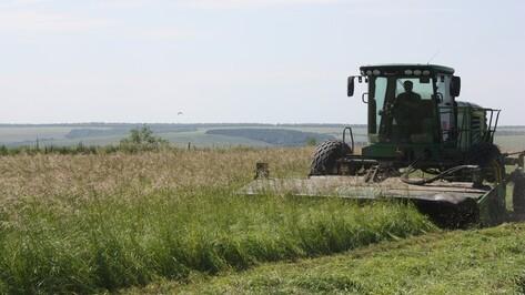Ольховатские аграрии из-за дождей приостановили заготовку кормов