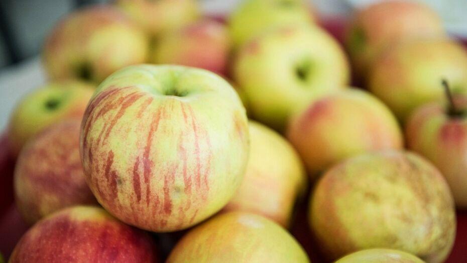 Под Воронежем на полигоне уничтожили 1,3 т польских яблок