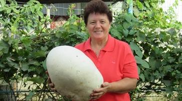 В Павловском районе жители нашли 7-килограммовый гриб дождевик