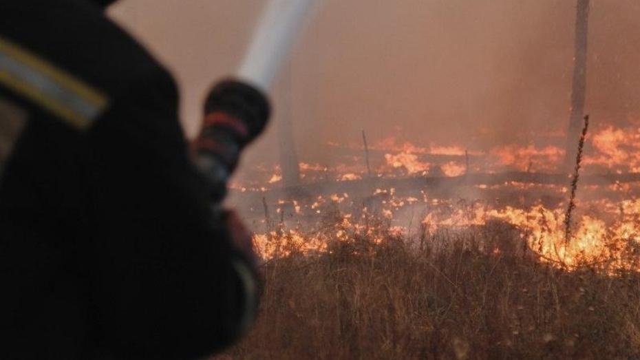 Взгляд из соцсетей. Как жители отреагировали на пожары в Воронежской области