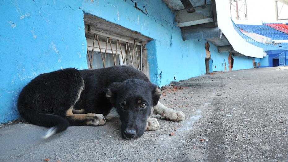 Два района Воронежа потратят на борьбу с бродячими животными до 3 млн рублей