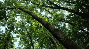 Власти Воронежа создадут лесопарковый зеленый пояс