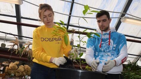 Воронежские волонтеры #МыВместе посадили апельсиновые деревья в ботаническом саду