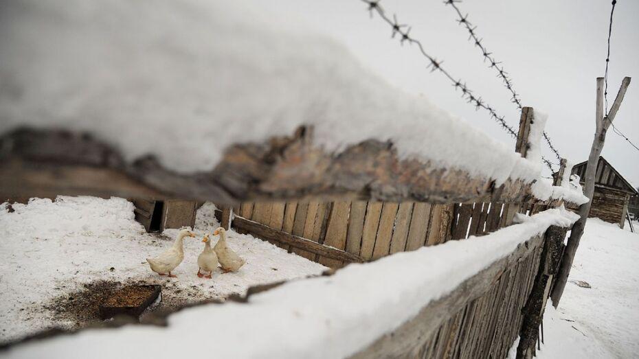 Под Воронежем похититель гусей попался 4 месяца спустя