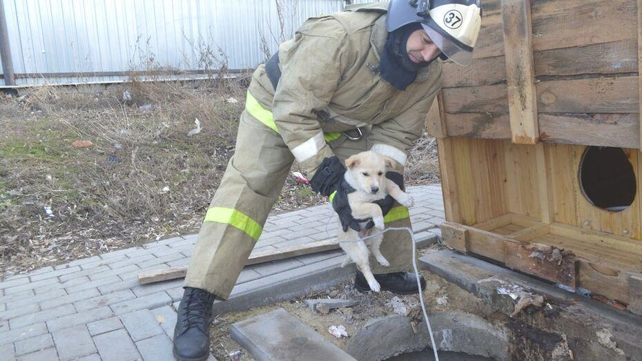В Воробьевке сотрудники МЧС вытащили щенка из общественного туалета