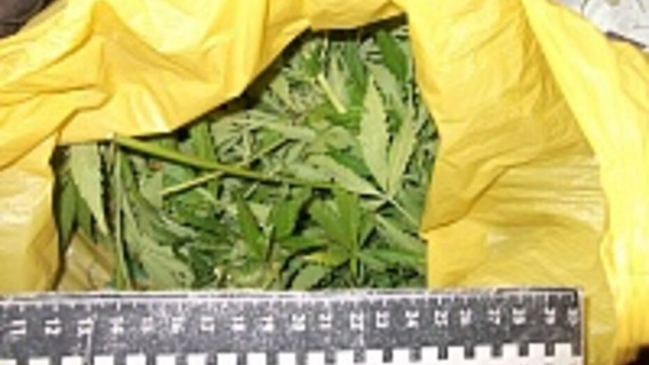 Полицейские нашли марихуану у жителя Верхнемамонского района