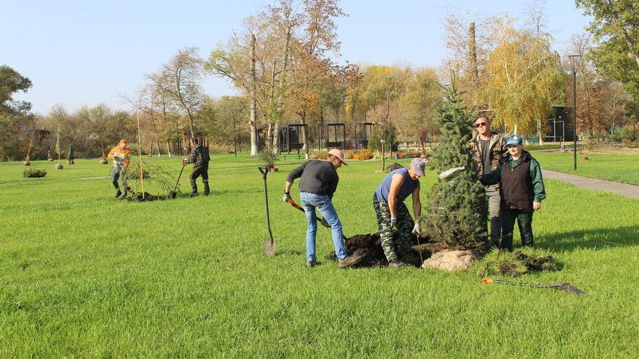 В центральном парке Ольховатки высадили 300 деревьев и кустарников