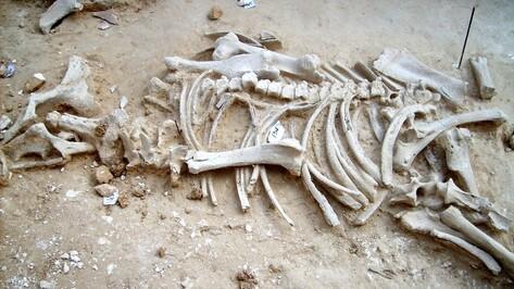Дивногорье покажет коллекцию лошадиных черепов в Тамбове