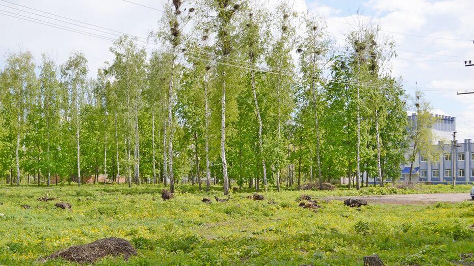 В Терновке на благоустройство парка выделят 10 млн рублей