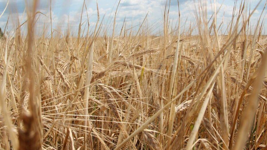 Воронежская область получит из федбюджета 338 млн рублей на развитие растениеводства