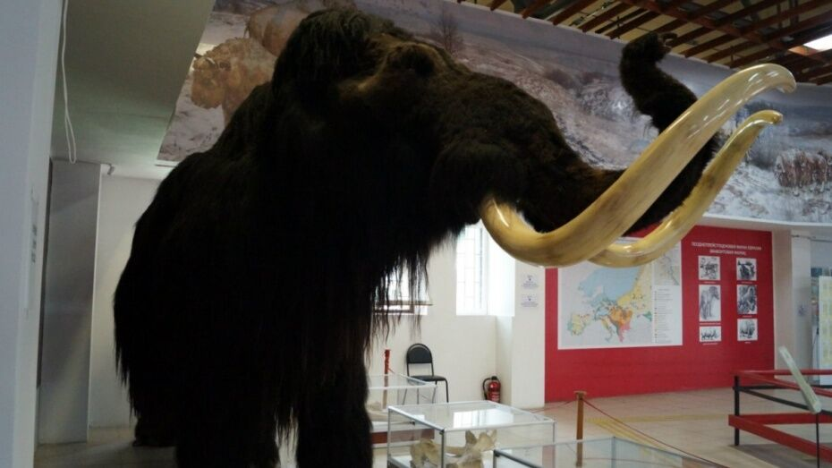 Сотрудники музея «Костенки» позвали воронежцев на экскурсию и концерт