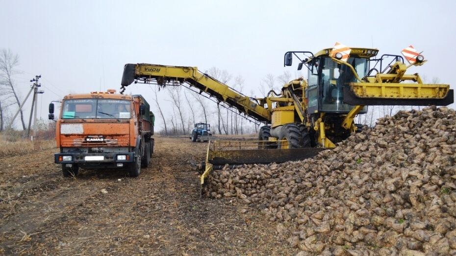 В Воронежской области аграрии собрали первый миллион тонн сахарной свеклы