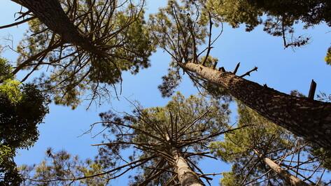 Опасения жителей Шилово о вырубке леса развеяли в мэрии Воронежа