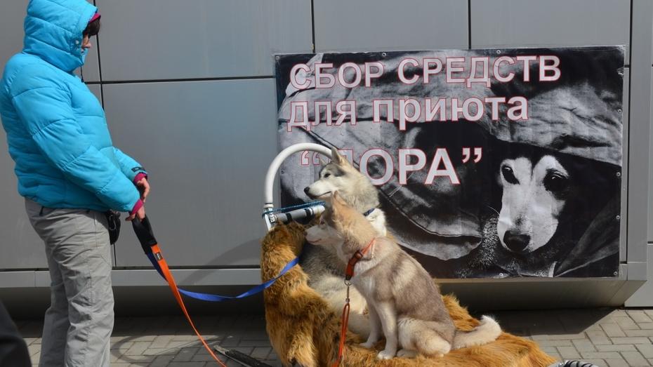Воронежские зоозащитники раздадут валентинки с изображением собачьих лап