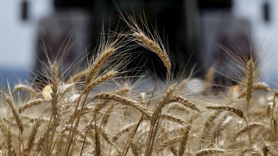 Исторический рекорд урожая зафиксировали в Воронежской области