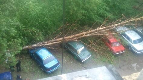 Сегодня и завтра в Воронежской области объявлено штормовое предупреждение