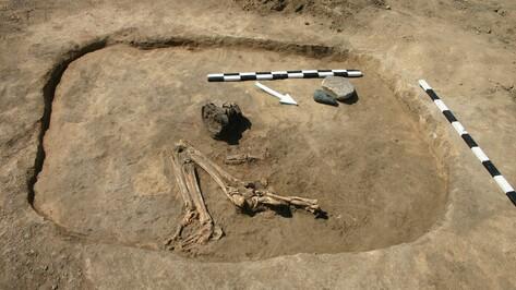 В Павловском районе археологи нашли захоронения катакомбной культуры