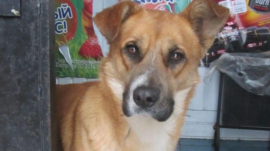 В каширском селе верный пес почти год ждет на остановке бросившую его хозяйку