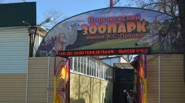Воронежский зоопарк пригласил добровольцев на уборку
