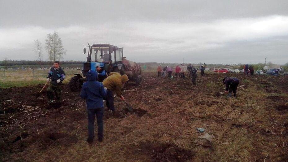 В Ольховатском районе восстановили «Лес Победы»