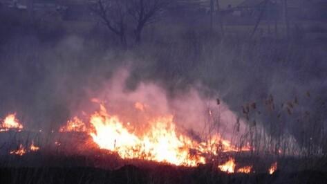 В Воронежской области за неделю произошло 76 ландшафтных пожаров