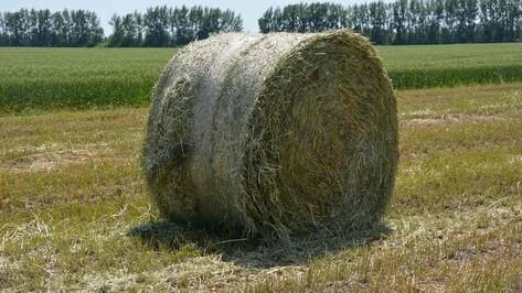 В Каширском районе началась заготовка сена