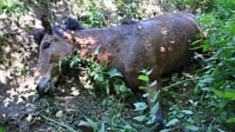 На обочине дороги «Павловск-Бутурлиновка» близ павловского села два дня пролежала мертвая лошадь