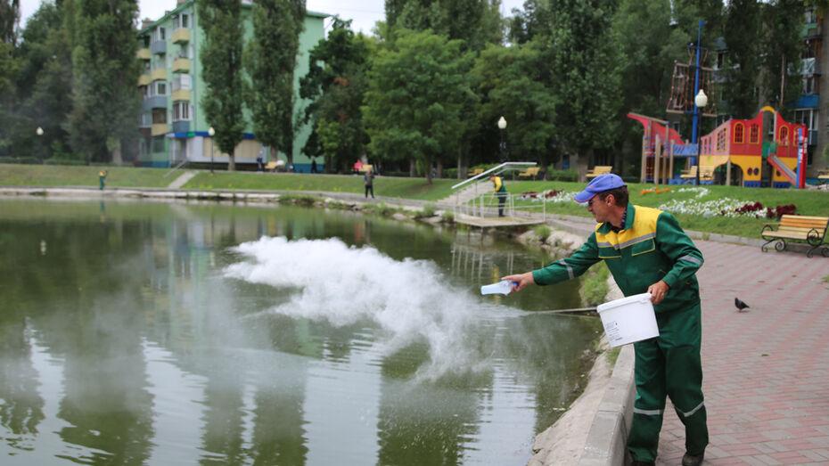 В воронежский водоем на улице Минская запустили бактерии