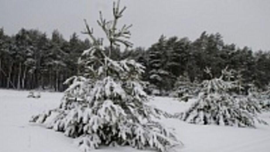 Воронежская лесотехническая академия готова передать часть своих земель региону