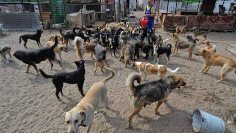Воронежцы собирают подписи против закрытия приюта для бездомных животных «Дора»