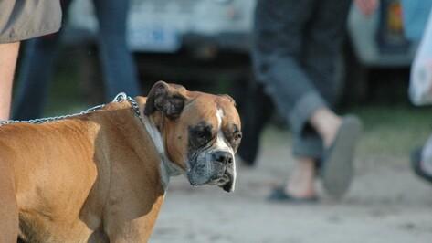 Воронежские депутаты запретили детям выгуливать крупных собак