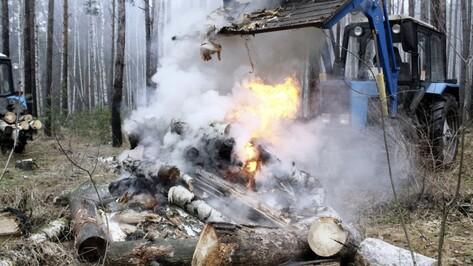 В Воронеже вырубят 1,9 тыс аварийных деревьев в 2018 году