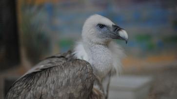 В Воронежском зоопарке из-за эпидемии уничтожили 176 птиц