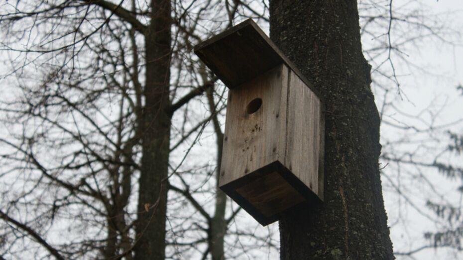 Развешивание скворечников в воронежском парке перенесли из-за непогоды