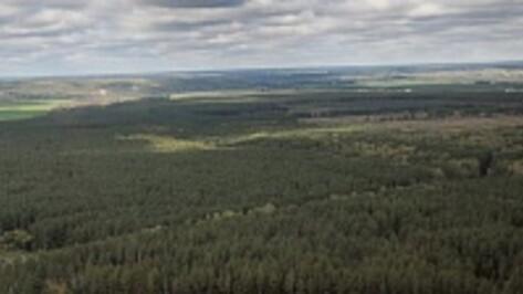 Воронежские леса потушат с вертолета Минобороны