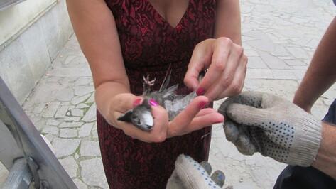В Воронеже в часах на проспекте Революции застряла птица
